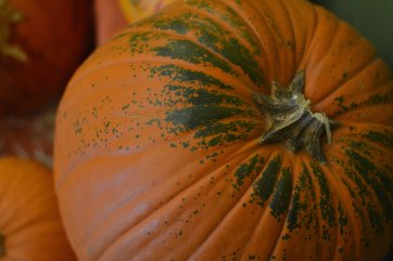 fall-pumpkins-chs-2