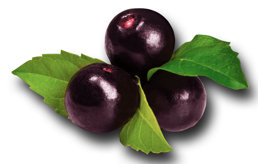 acai isolated