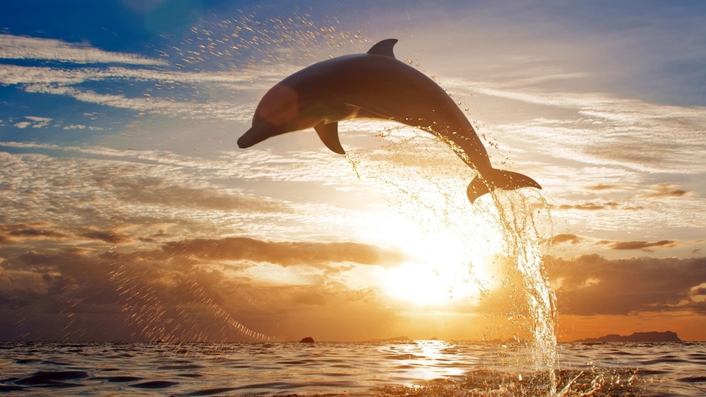 holly dolphin