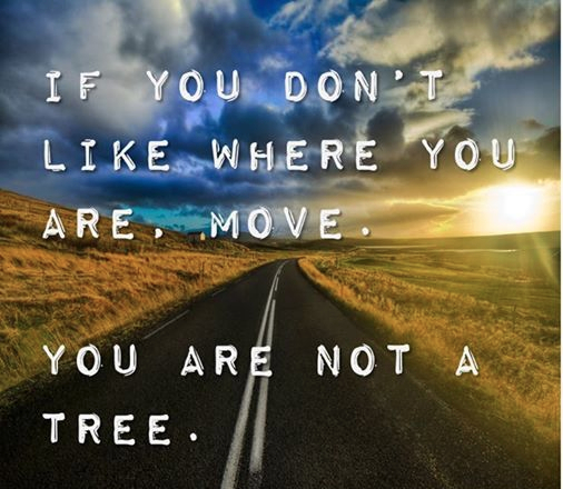 move-not-a-tree.jpg