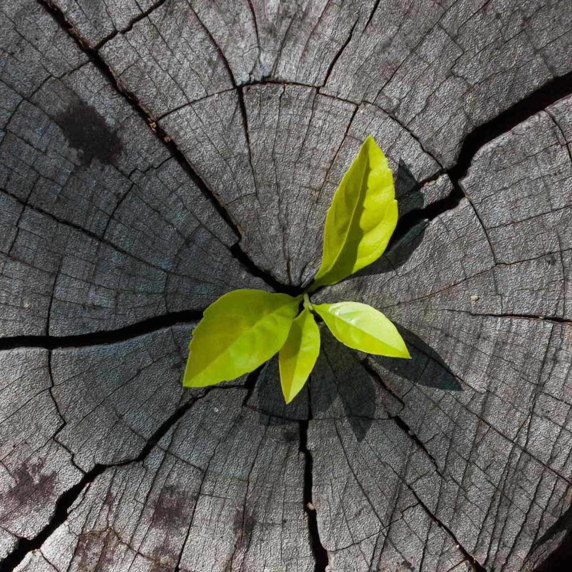 ambitous-growth-agenda_hero_1536x1536-758576565_b